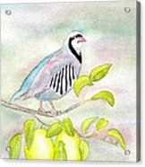 Partridge In A Pear Tree Acrylic Print