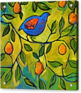 Partridge In A Pear Tree Acrylic Print