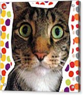 Party Animal- Cat With Confetti Acrylic Print