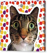 Party Animal - Smaller Cat With Confetti Acrylic Print