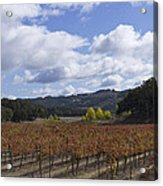 Paso Robles Autumn Acrylic Print