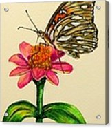 Passion Butterfly On Zinnia Acrylic Print