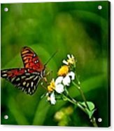 Passion Butterfly Painted Acrylic Print