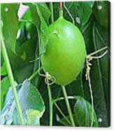Passion Fruit Acrylic Print