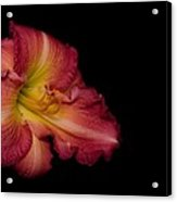 Passionate Lily 20 Acrylic Print