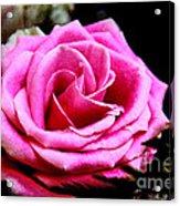 Passionate Rose Acrylic Print