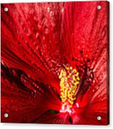 Passionate Ruby Red Silk Acrylic Print