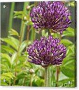 Passionately Purple Acrylic Print