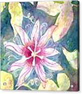 Passionflower Acrylic Print