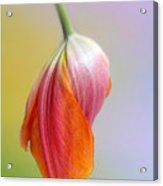 Pastel Petal Acrylic Print