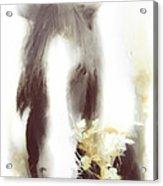 Pastel Pony Acrylic Print