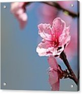 Pastel Spring Acrylic Print