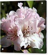 Pastel Springtime Acrylic Print