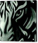 Pastel Tiger Acrylic Print