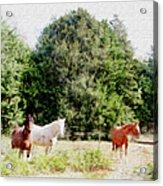 Pasture For Three Acrylic Print