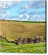 Pasture Land - Dorset Acrylic Print