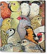 Patchwork Birds Acrylic Print