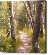 Path 1 Acrylic Print