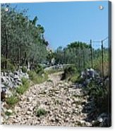 Path Among Olive Trees Acrylic Print