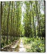 Path And Trees Acrylic Print