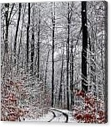 Path In A Forest In Winter In The Countryside  In Denmark Acrylic Print