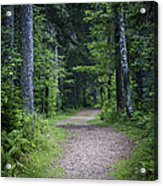 Path In Dark Forest Acrylic Print by Elena Elisseeva
