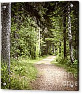 Path In Green Forest Acrylic Print by Elena Elisseeva