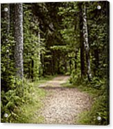Path In Old Forest Acrylic Print