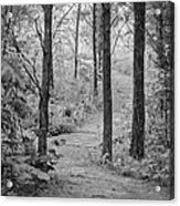 Path In The Foggy Forest Acrylic Print