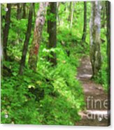 Path In The Forest Acrylic Print by Jill Lang