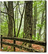 Path Into The Forest Acrylic Print by Debra and Dave Vanderlaan
