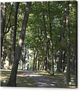 Path Into Woods Acrylic Print by Cim Paddock