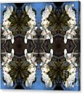 Path Of Flowers 2 Acrylic Print