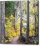 Path Of Peace Acrylic Print