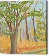 Path Of Trees Acrylic Print