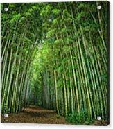 Path Through Bamboo Forest E139 Acrylic Print
