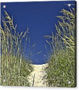 Path Through The Dunes Acrylic Print