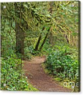 Path Through The Rainforest Acrylic Print