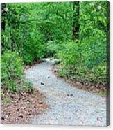 Path Through The Woods Acrylic Print