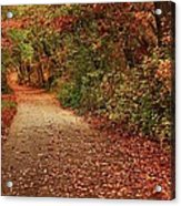 Path Thru The Woods Acrylic Print
