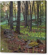 Path To The Daffodils Acrylic Print by Bill Wakeley