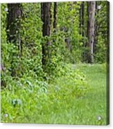 Path To The Green Forest Acrylic Print