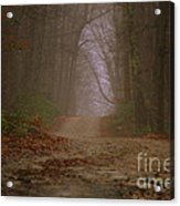 Path To Wolf Den  Acrylic Print