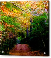 Paths We Choose Acrylic Print