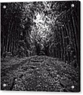 Pathway Through A Bamboo Forest Maui Hawaii Acrylic Print