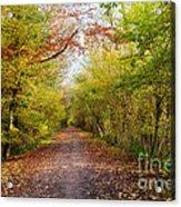 Pathway Through Sunlit Autumn Woodland Trees Acrylic Print by Natalie Kinnear