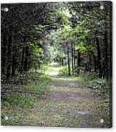 Pathway Through The Forest Acrylic Print