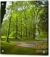Pathway Through The Trees Acrylic Print