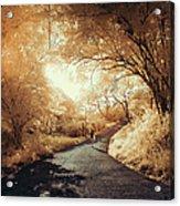 Pathway To Wonderland Acrylic Print