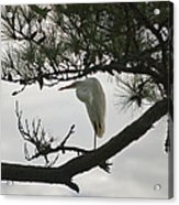 Patience Wil 358 Acrylic Print